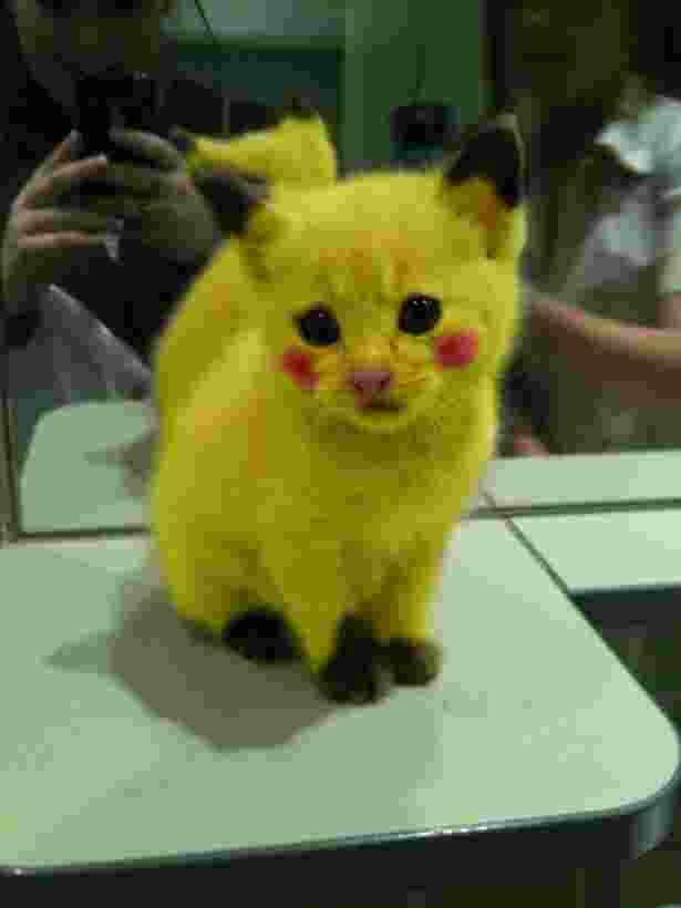 Heboh Pokemon Go, Anjing ini Dirubah Jadi Pikachu