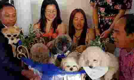 Pernikahan Anjing ini Habiskan Biaya Biaya 340 Juta Rupiah