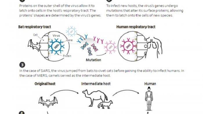 Image Result For Virus Baru Dari China Selain Corona